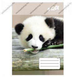 VICTORIA Wildlife kockás füzet, Panda, A4/87-32