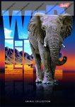 Wild Life - Elefánt spirálfüzet, A4, kockás, 96 lap