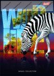 Wild Life - Zebra spirálfüzet, A4, kockás, 96 lap