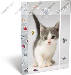 Pet Fluff Kitten/Cicás A/4 gumis dosszié