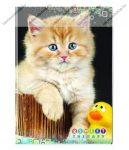 Animals Home - Cica kacsával kockás füzet, A/4