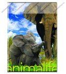 Animals pet - Elefánt kockás füzet, A/4