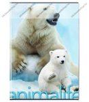 Animals pet - Jegesmedve kockás füzet, A/4