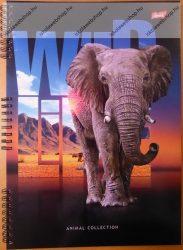 A4 vonalas spirálfüzet, Wild - Elefánt, 50 lapos
